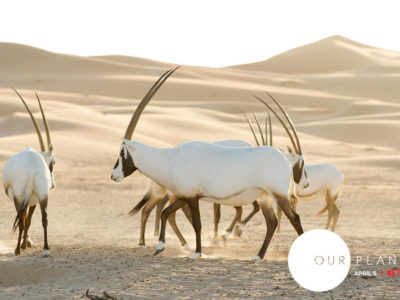 our planet netflix oryx