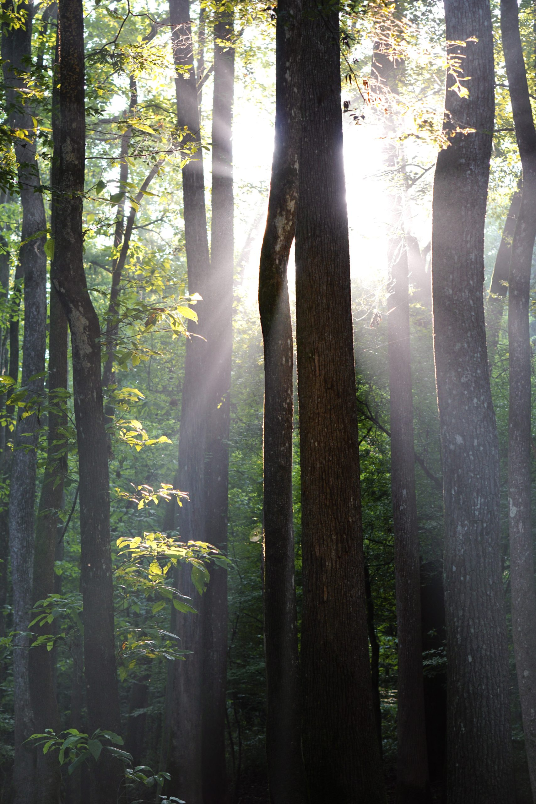Sunrise at Congaree National Park