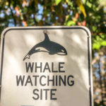 Whale Watching Site Sign