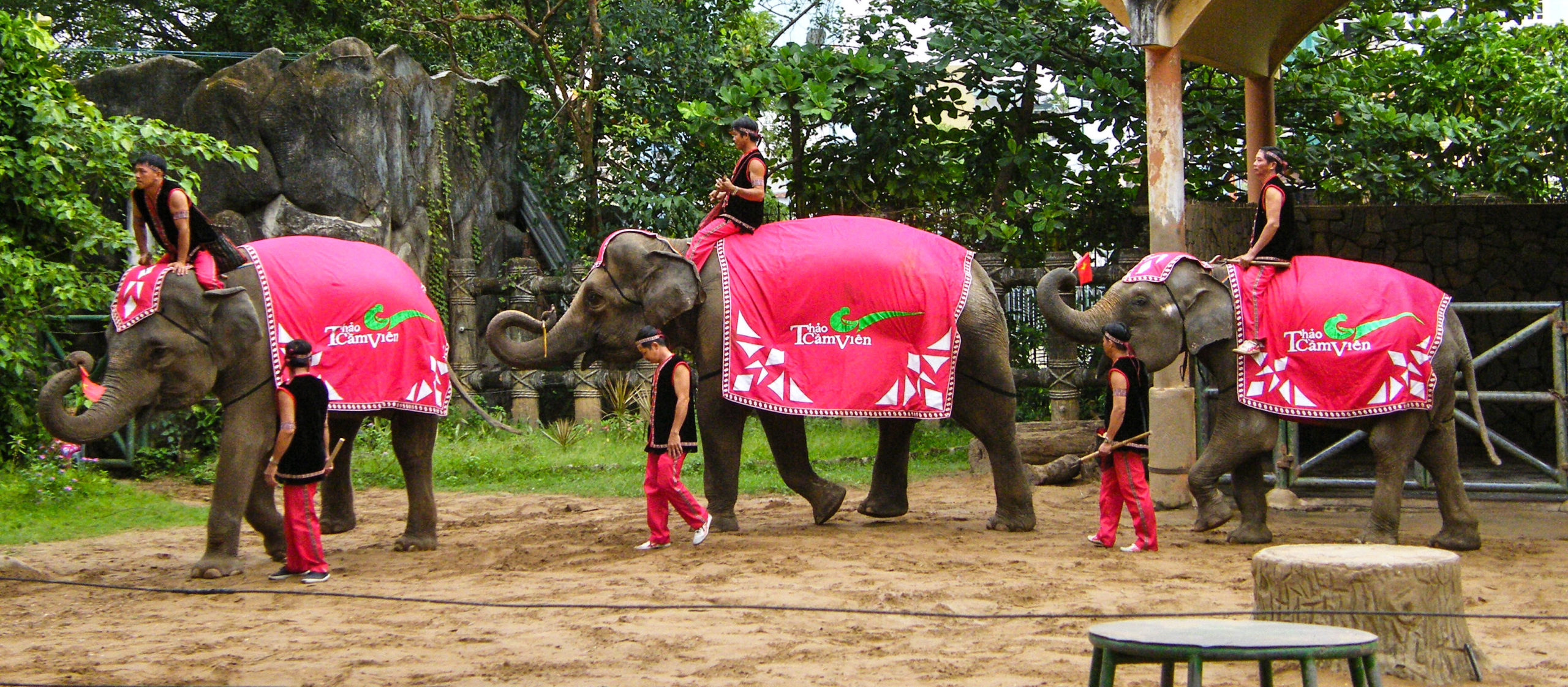 Unethical elephant circus show in Vietnam