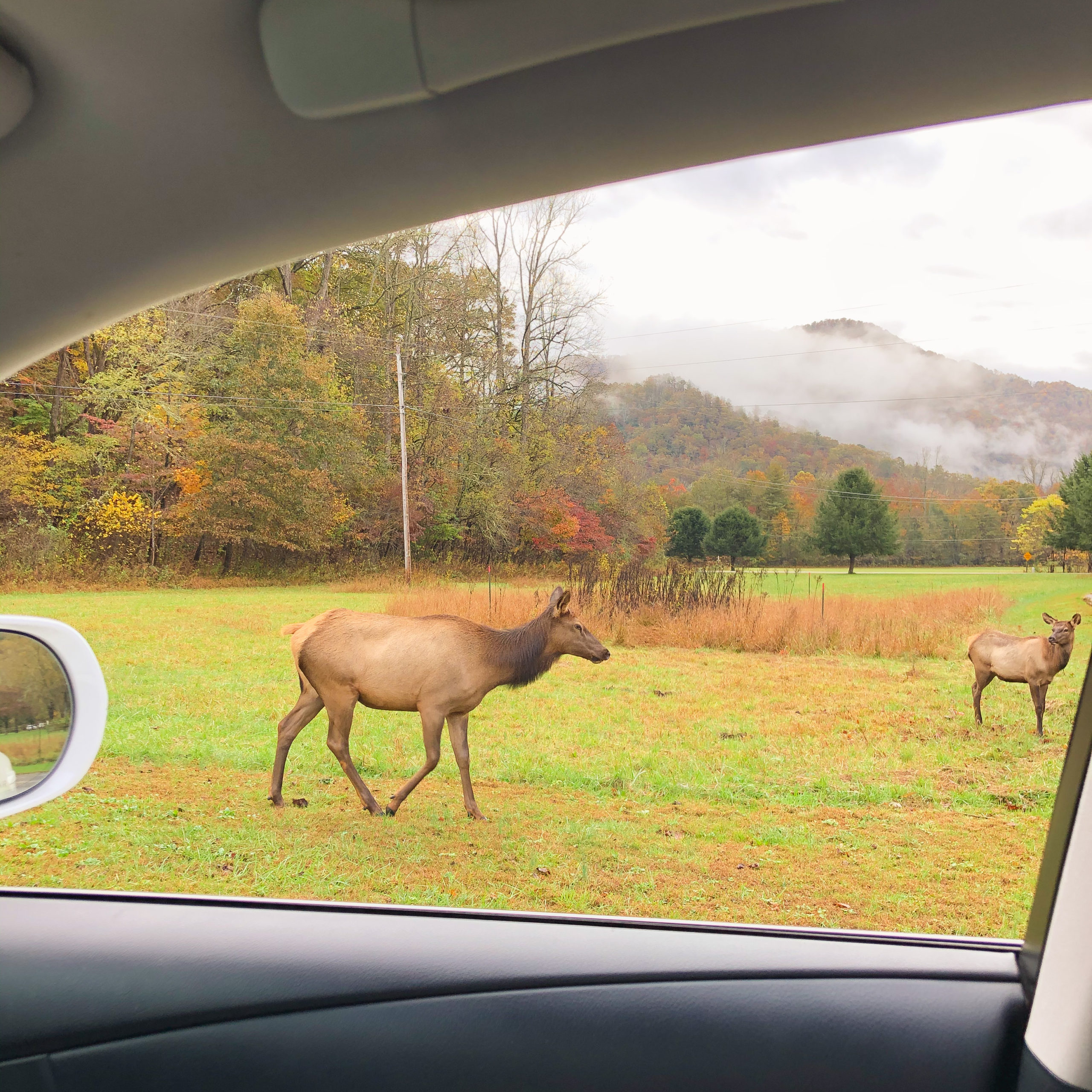 Viewing elk Great Smoky Mountains National Park