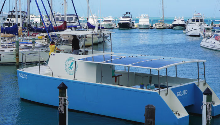 Honest Eco Dolphin Watch Tours Squid Electric solar powered Boat key west Florida