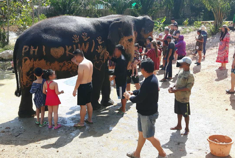 tourists painting mud on elephants in an unethical tourism encounter