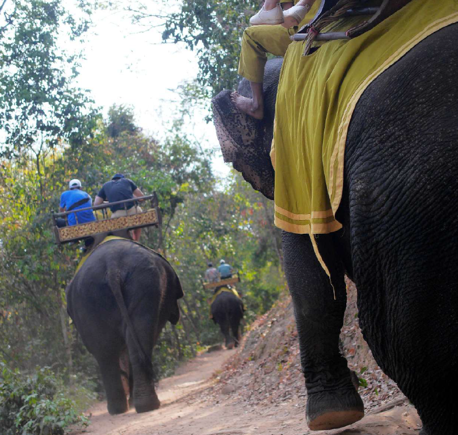 Abusive elephant riding with tourists in Thailand