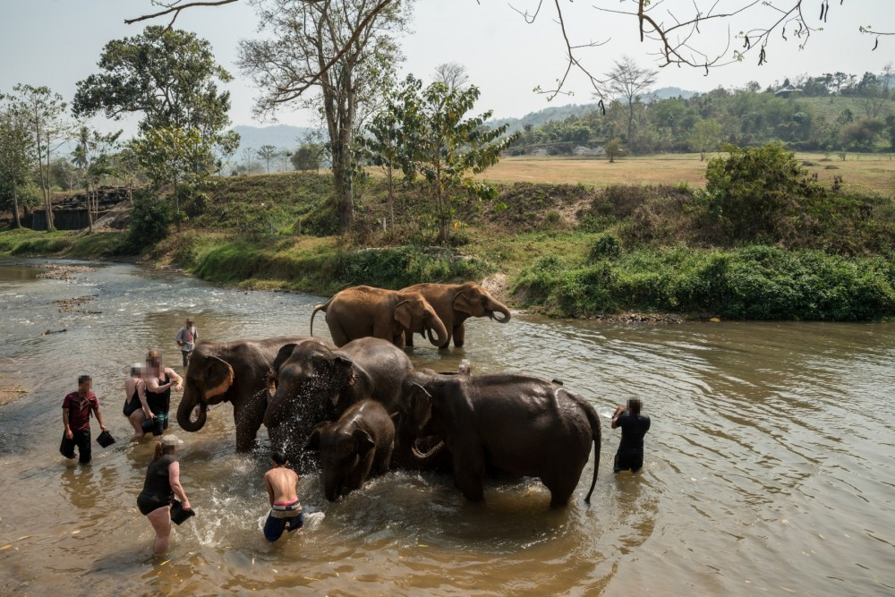 Tourists bathing elephants in the river during an unethical elephant encounter