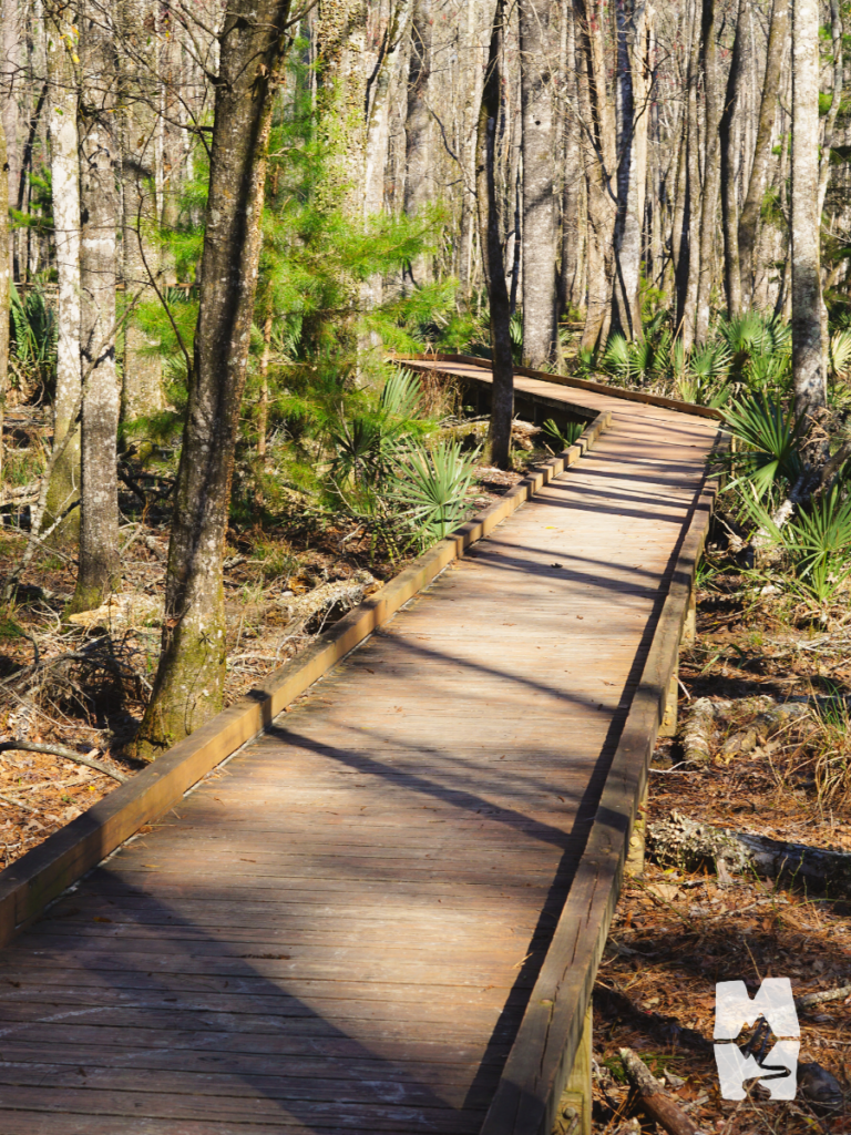 Wooden boardwalk through low country swamp outside of Charleston, South Carolina