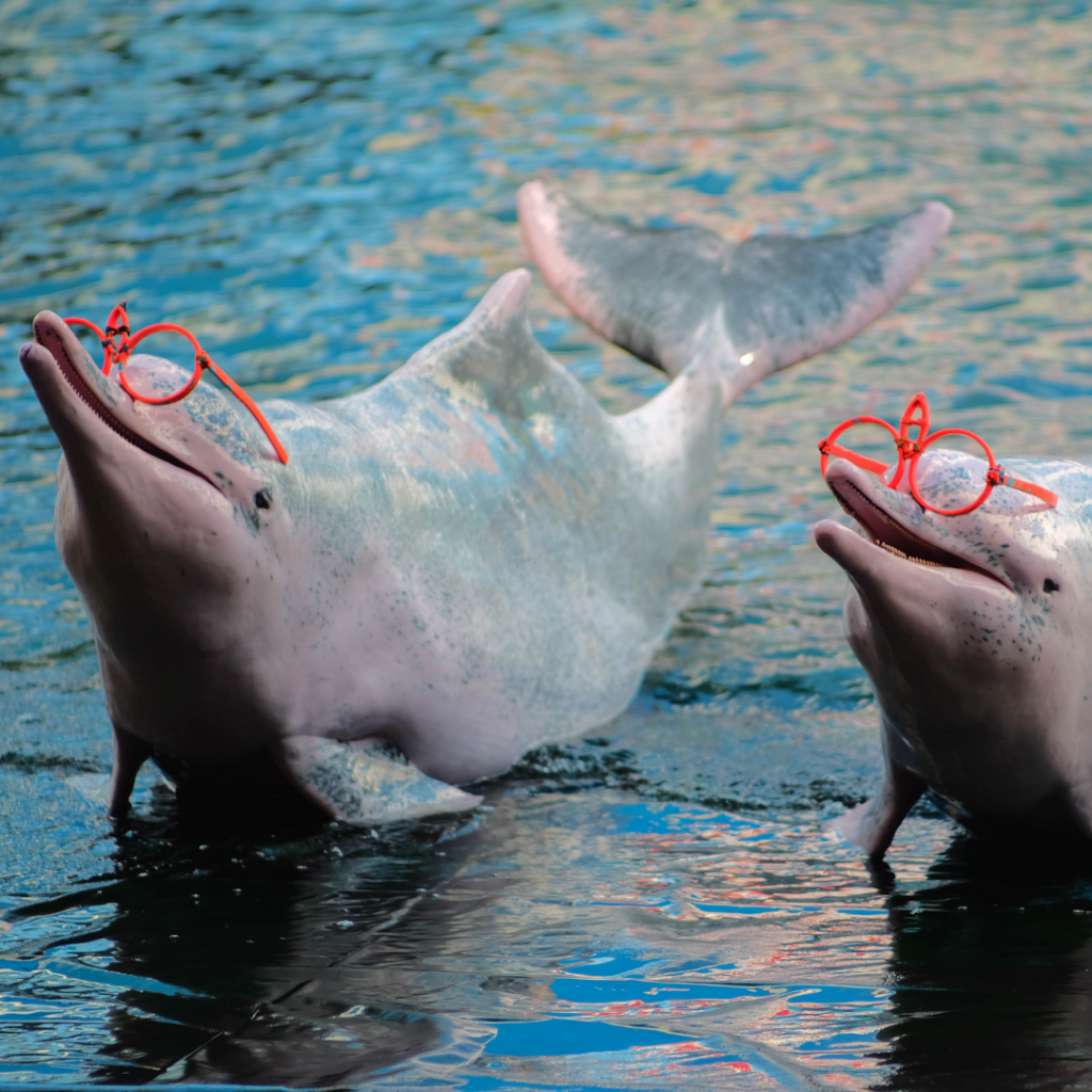 performing dolphins forced to do tricks and where glasses