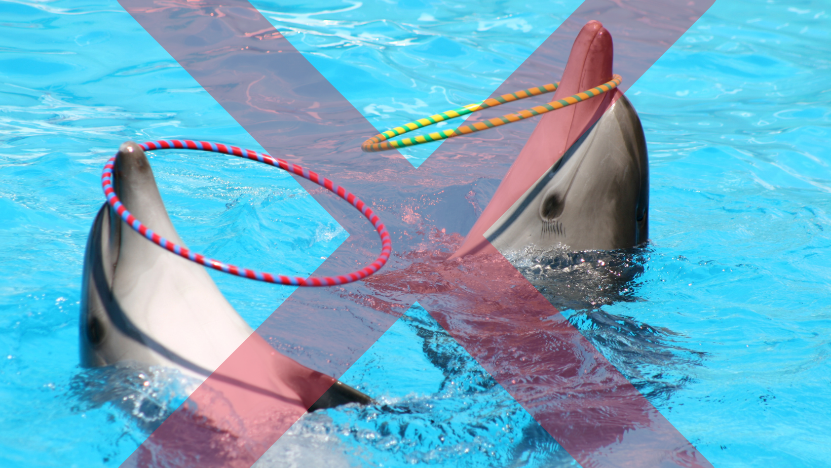 Unnatural dolphin shows with dolphins balancing hoops