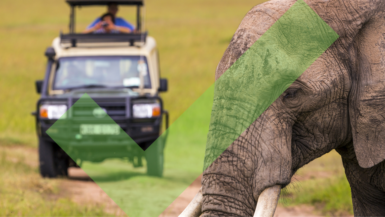 African elephant viewed on safari from a jeep