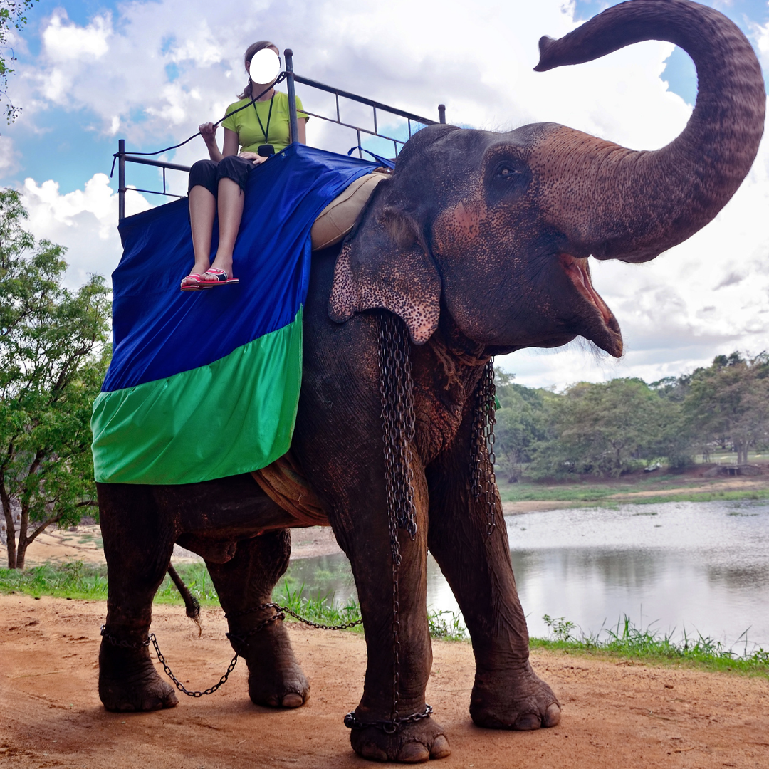 chained elephant used for selfies with tourists