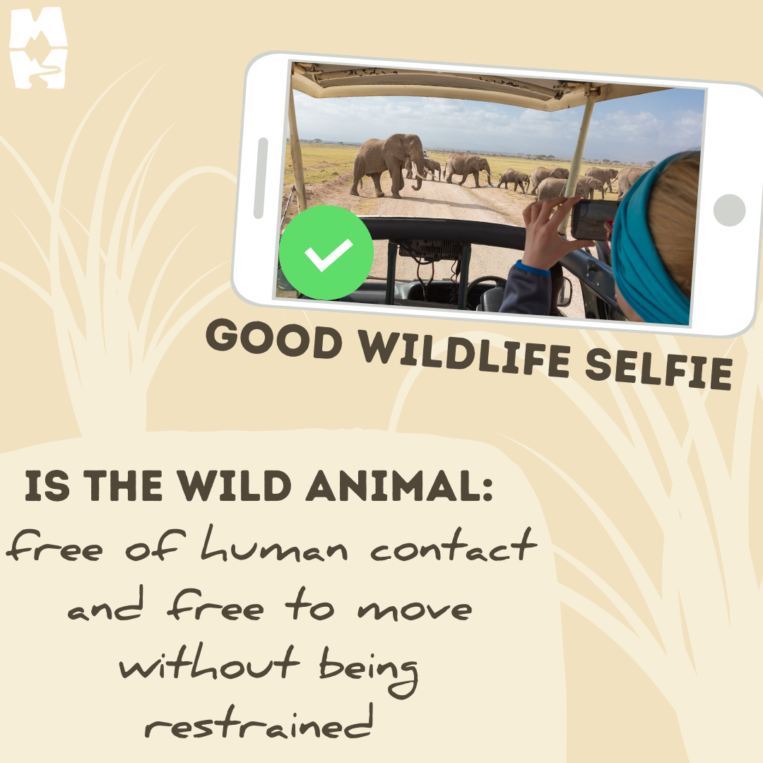 good ethical selfies with wildlife