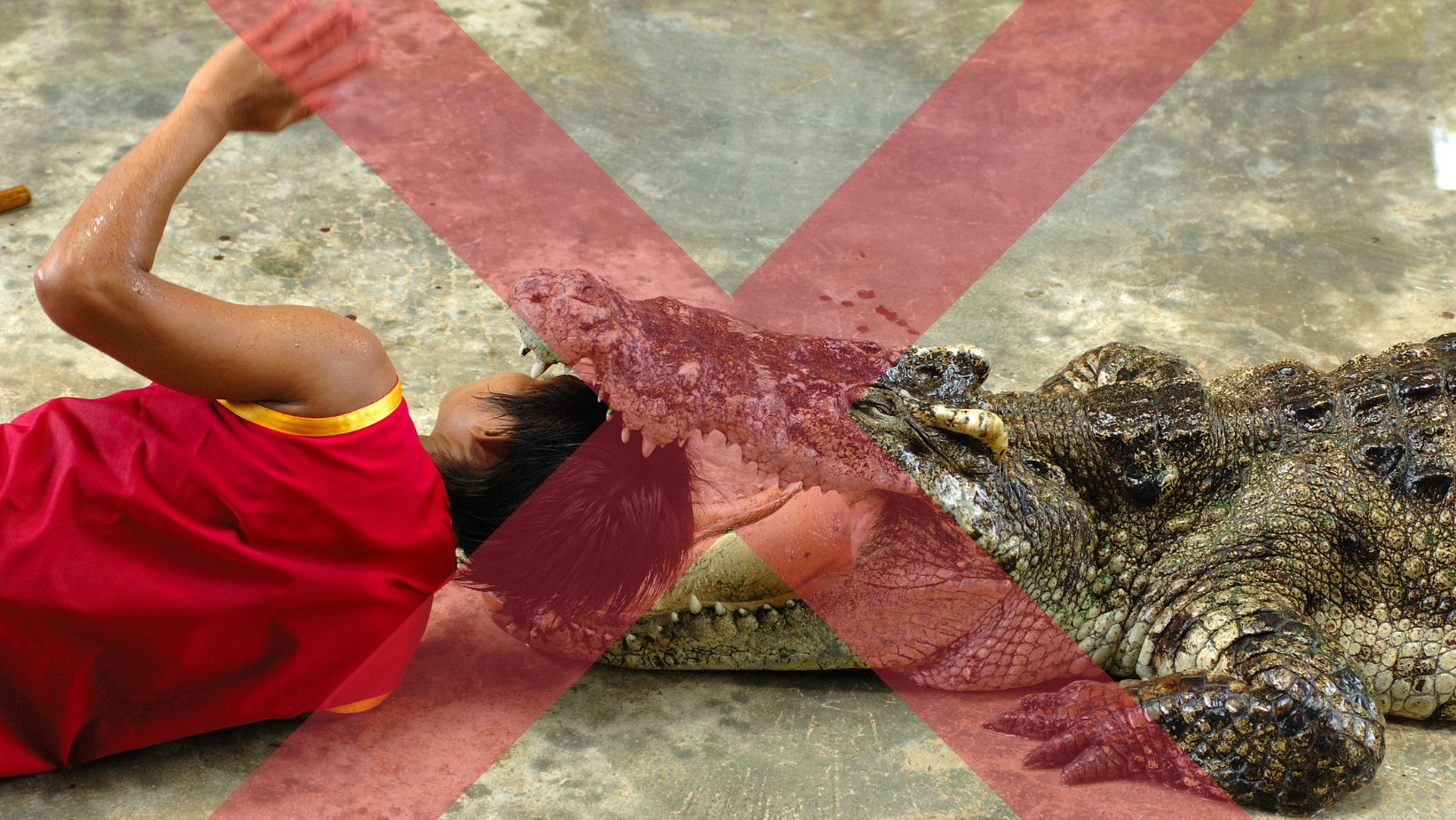 Person with their head inside a crocodile mouth at an unethical and extremely dangerous crocodile show.