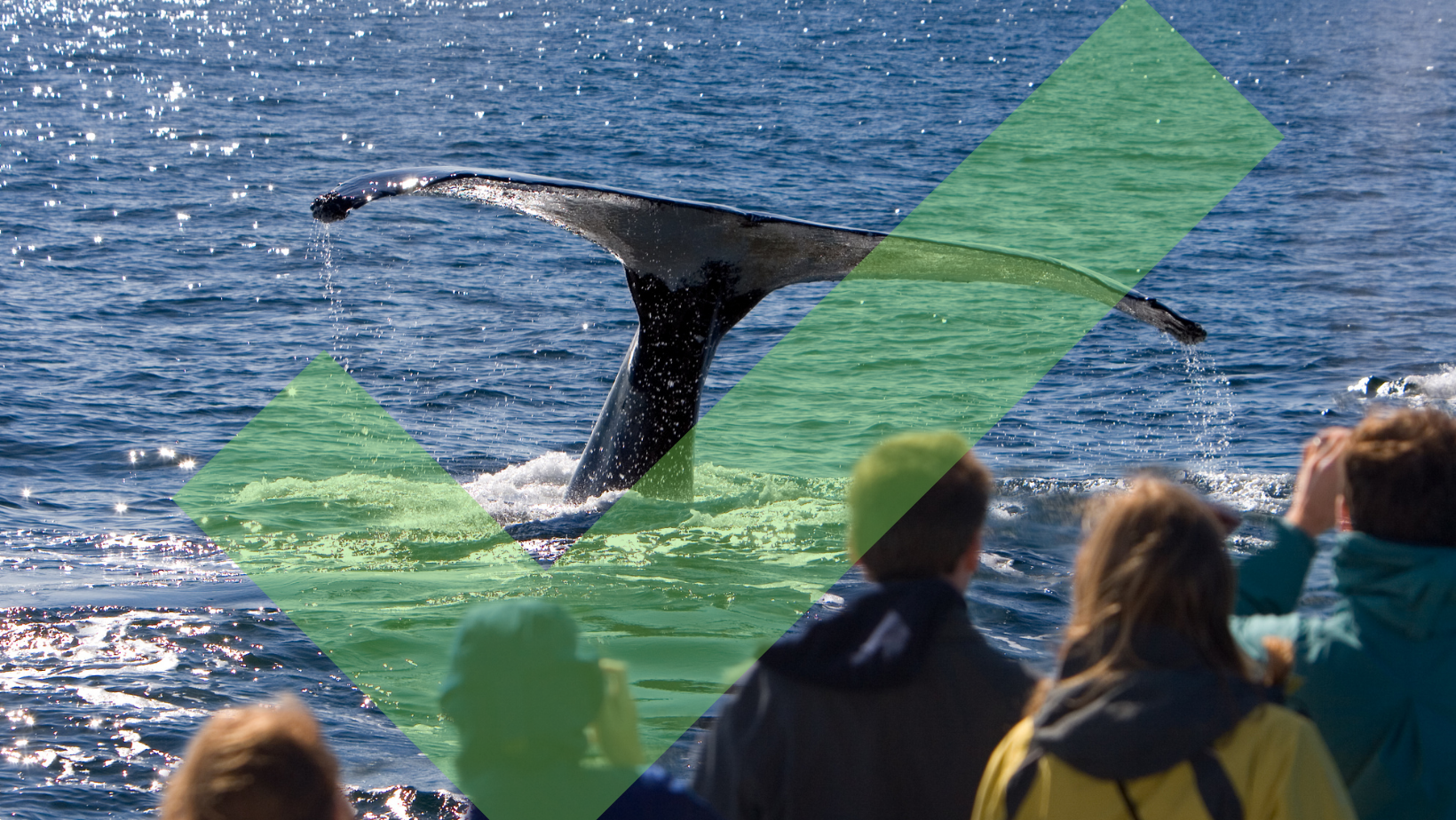 Ethical whale watching tail fluke with a crowd watching