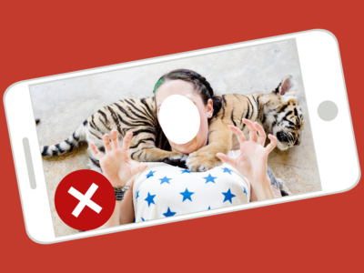 Abusive animal selfie with a sleeping tiger cub